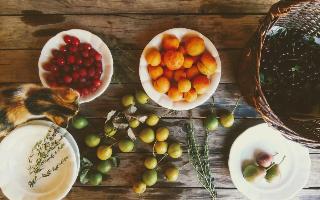 Krajina plná ovoce