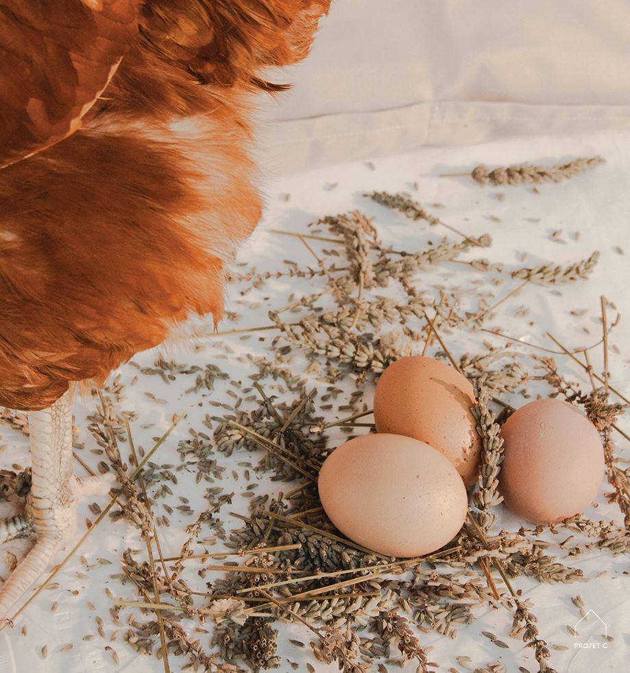 10 pourquoi mes poules ne pondent plus poules en ville - Poules en ville reglementation ...