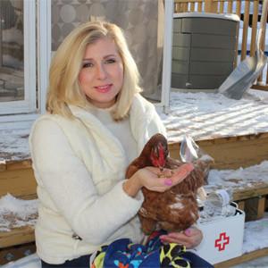 Avez-vous examiné l'état de santé de vos poules cette semaine ?