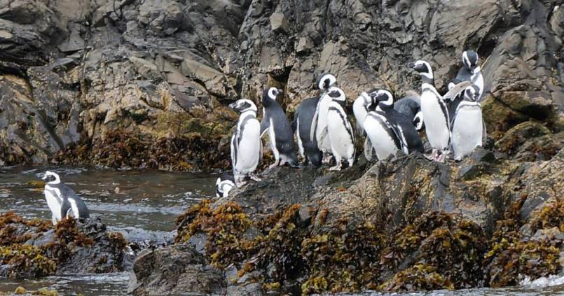 Gang de pingouinos 1