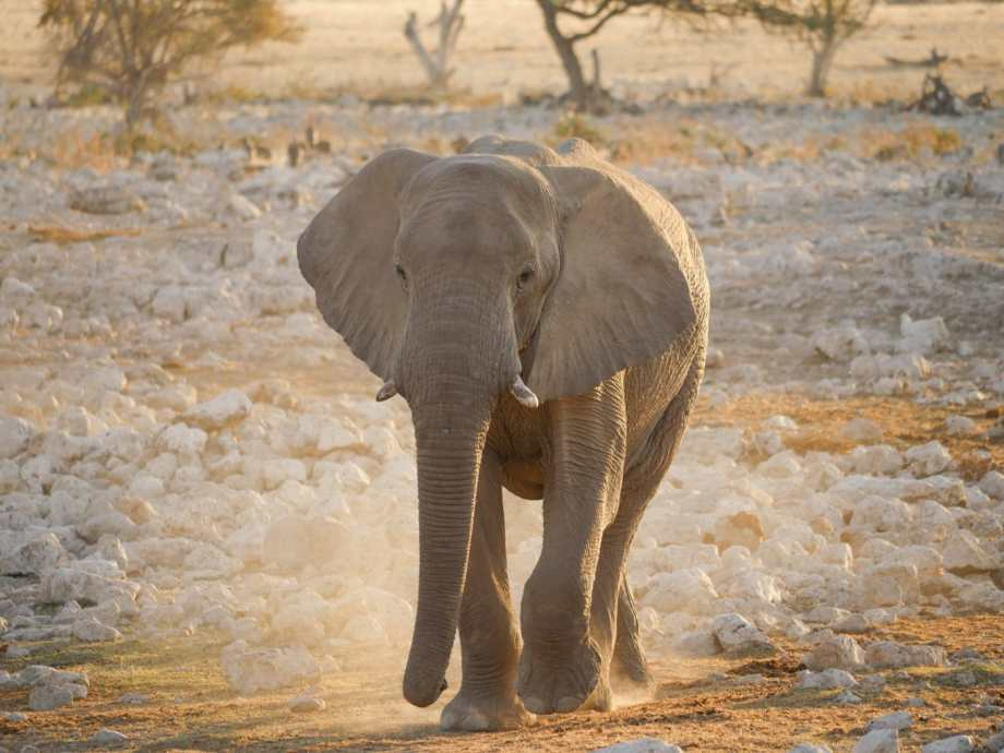Safari au parc national d'Etosha en Namibie 12