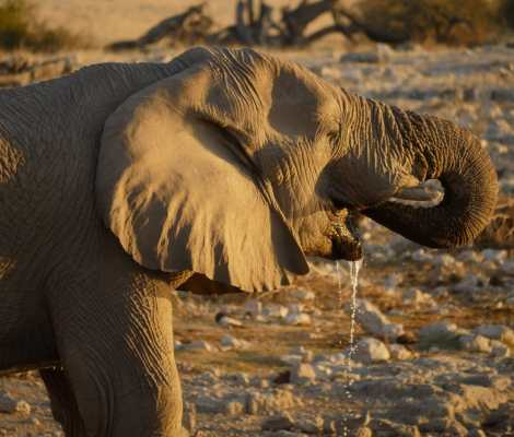 Safari au parc national d'Etosha en Namibie 5