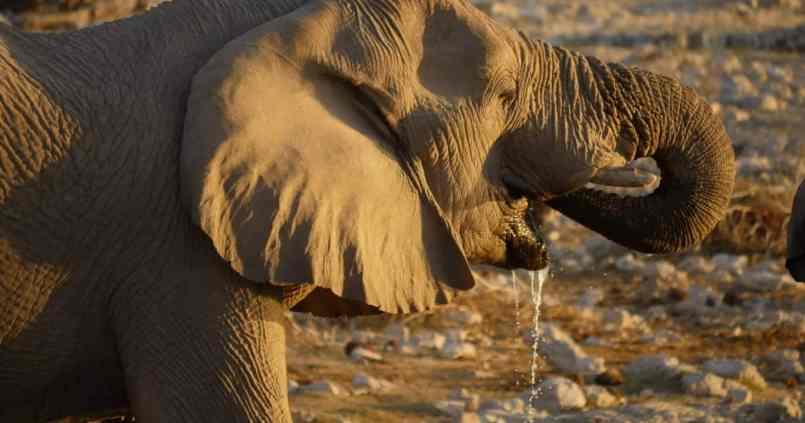 Safari au parc national d'Etosha en Namibie 1