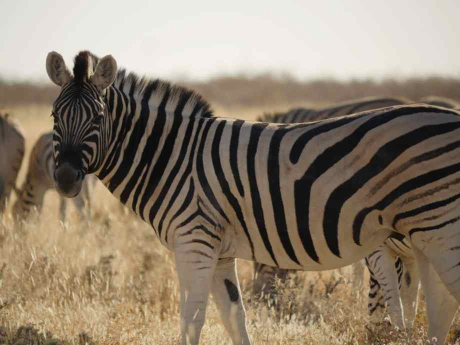 Safari au parc national d'Etosha en Namibie 4