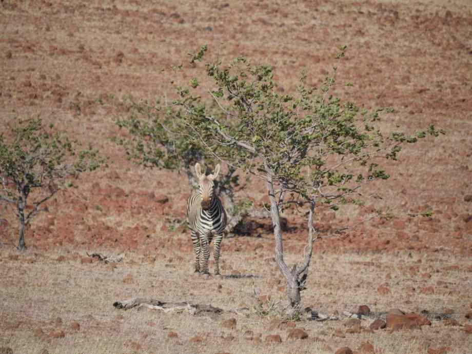 Tourisme en Namibie : les 6 incontournables de notre road trip 8