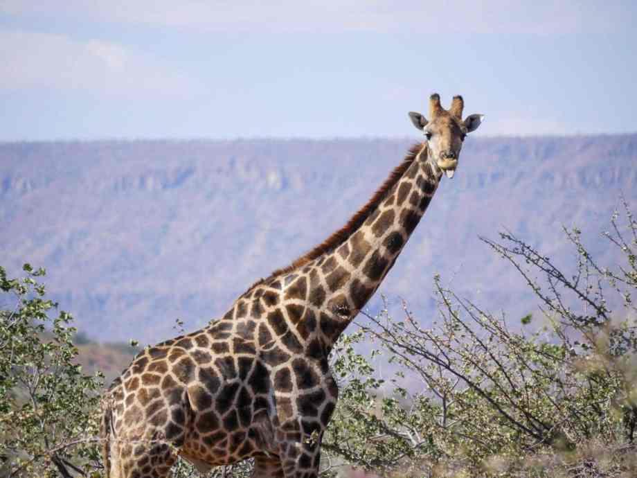 Tourisme en Namibie : les 6 incontournables de notre road trip 4