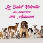 A l'occasion de la Saint-Valentin, Veepee célèbre les amoureux des animaux et organise une collecte digitale au profit de refuges indépendants