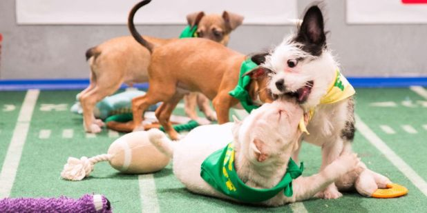 10-Facts-You-Don't-Know-about-Puppy-Bowl-11 Top 10 Facts You Don't Know about Puppy Bowl
