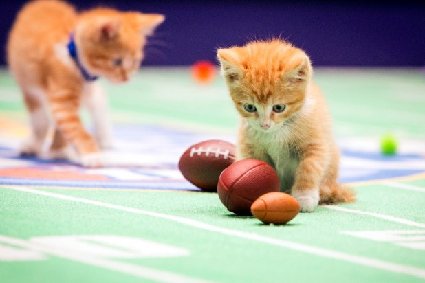 10-Facts-You-Don't-Know-about-Puppy-Bowl-24 Top 10 Facts You Don't Know about Puppy Bowl