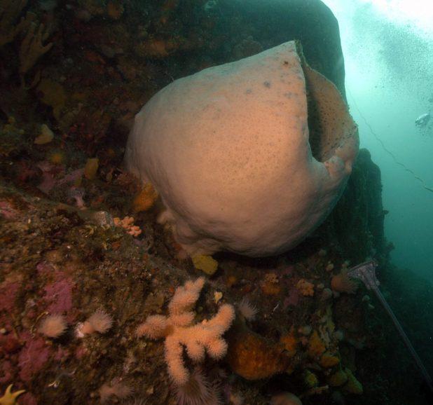 Antarctic-sponge 10 Animals That Outlive People