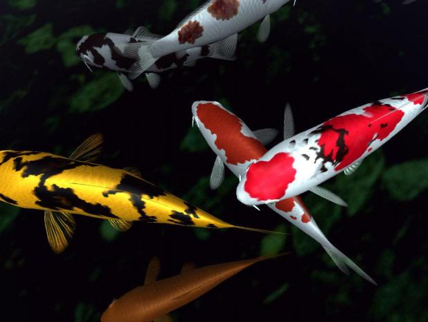 koi 10 Animals That Outlive People
