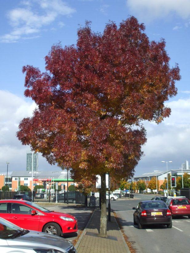 DSCF9580 Top 10 Fastest Growing Trees in the World
