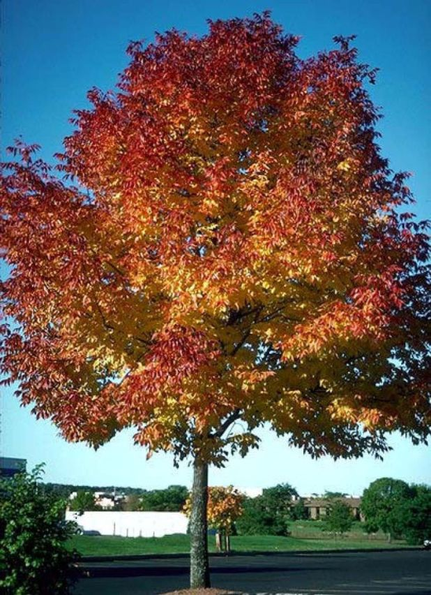 a867f171bcadd2666b50ebe442d9fc33 Top 10 Fastest Growing Trees in the World