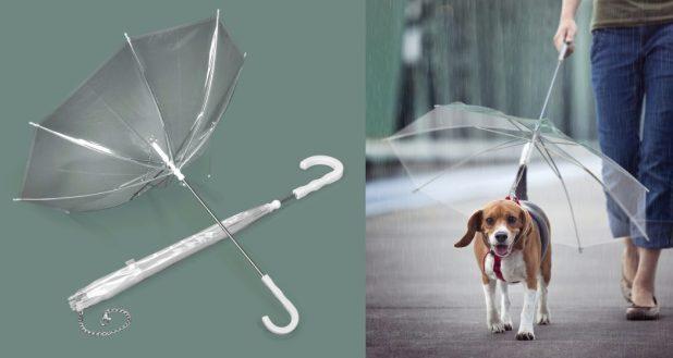 Pets-Umbrella2 15 Unusual Designs For Umbrellas