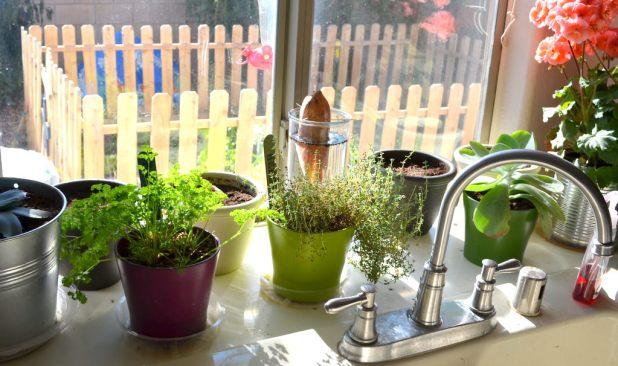 fresh-plants1 5 Kitchens' Decorations Ideas For 2017