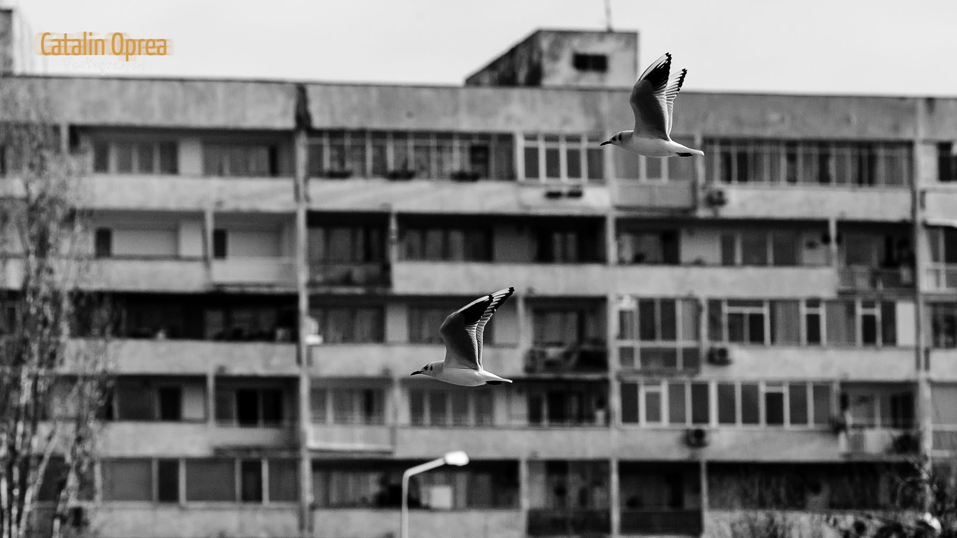 day014-seaguls-05118.jpg