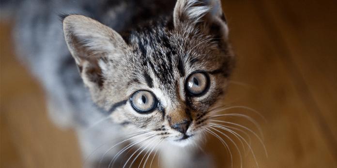 Keep cats indoors