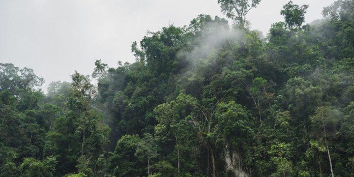 mayombe-rainforest-the-amazon-of-africa