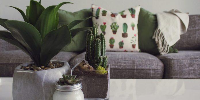 3-best-plants-for-beginners