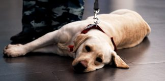 the-mental-health-benefits-of-owning-a-pet