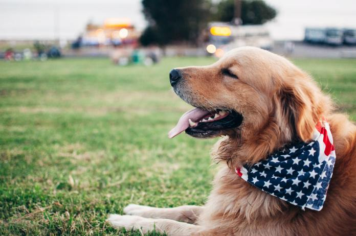 replacing-humans-with-canine-electoral-candidates
