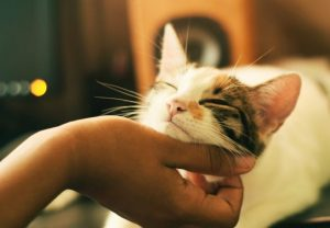 fostering-cats-and-dogs-why-its-a-great-idea