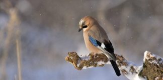 5-products-from-amazon-for-bird-feeding-month