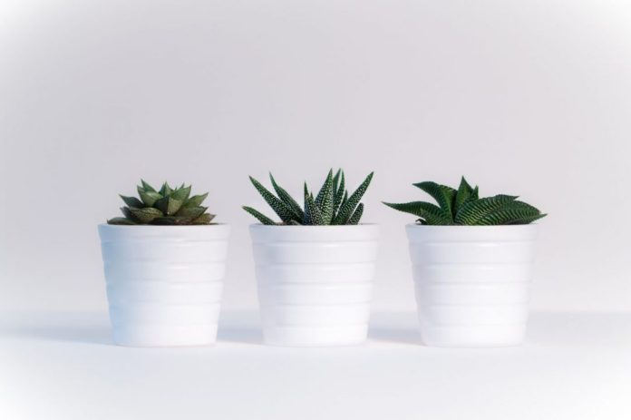 How succulents thrive: 3 of my best tips