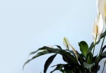 5-best-air-purifying-plants