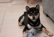3 cute ways to surprise your dog