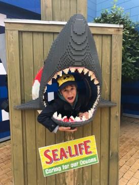 Bacha na žralokov! :)