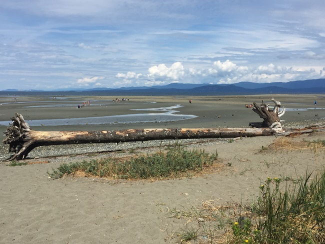 Parksville Beach log