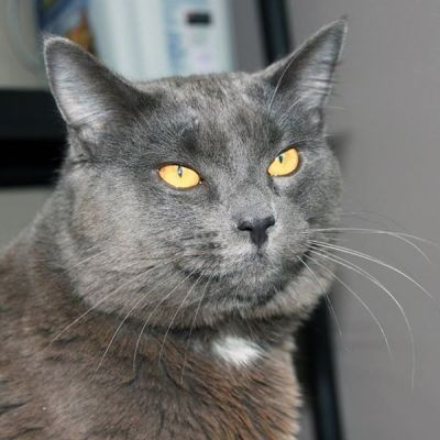 Cat Adoption – Meet Napoleon