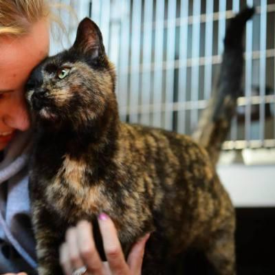 Cat Adoption- Meet Katie