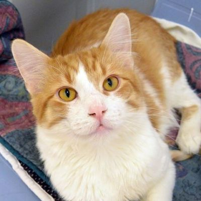 Cat Adoption- Meet Glen