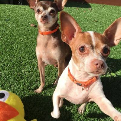 Pet Adoption- Meet Coco and Lila