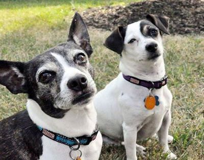 Pet Adoption – Dillion and Darlin