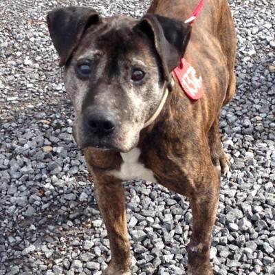 Pet Adoption – Meet Brody