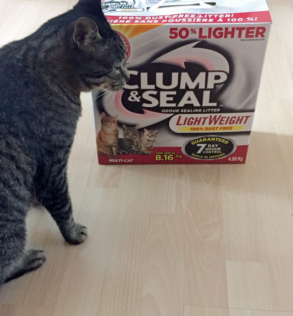 arm-and-hammer-cat