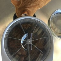 PetSafe Six Automatic Pet Feeder Makes Meals on Time Every Time