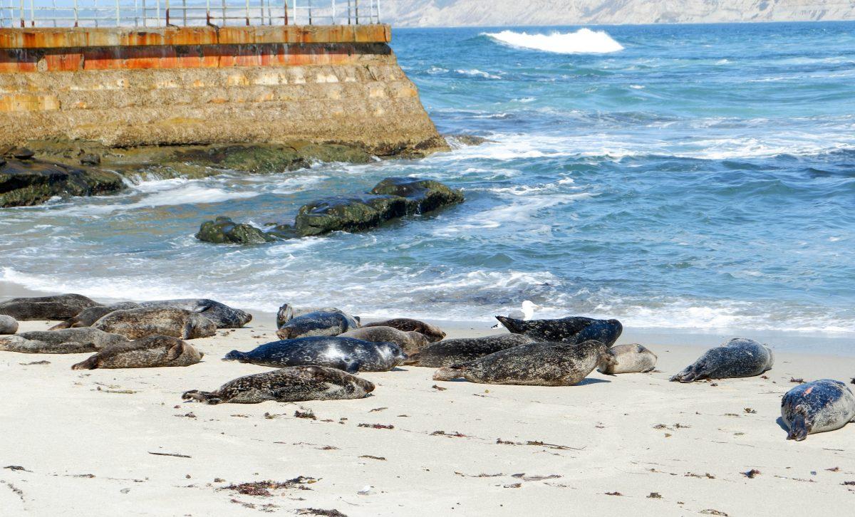Go watch the sea lions in La Jolla San Diego