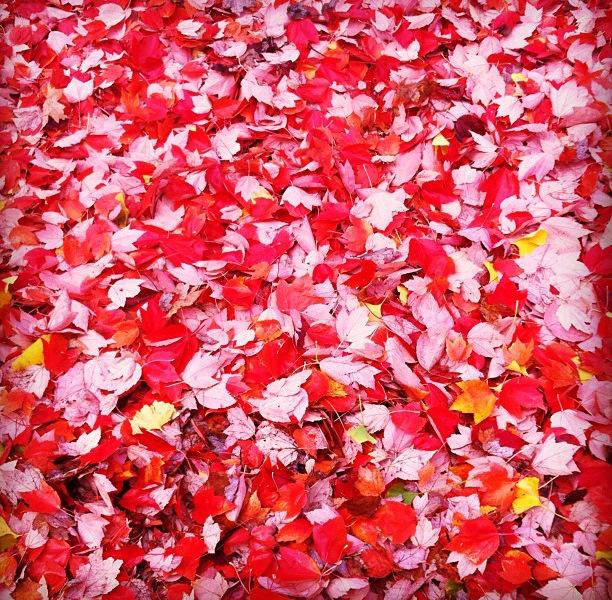 November fall leaves in Portland