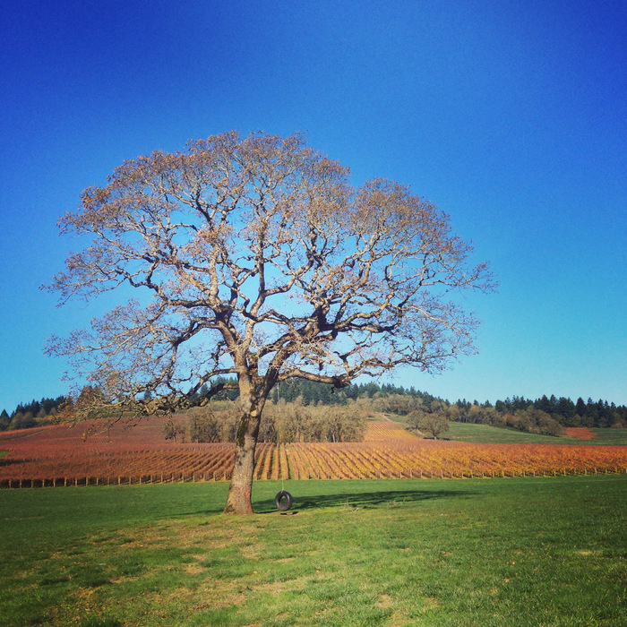 December in portland, winter tree wine country