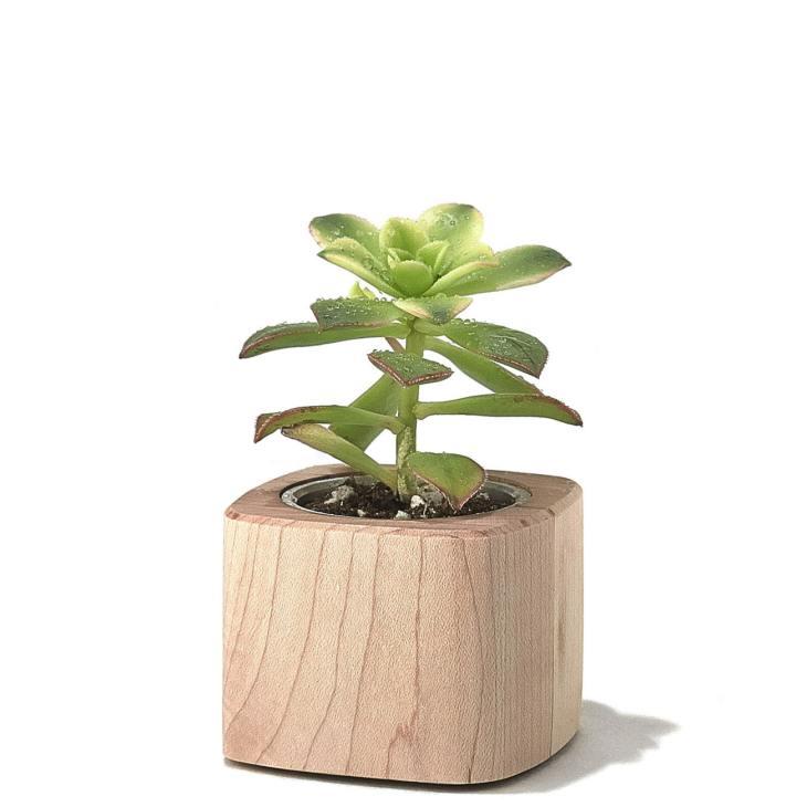 Grove succulent planter