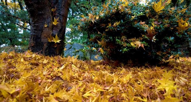 japanese garden leaves
