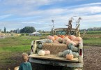 Pumpkin Truck at Topaz Farm old Kruger on Sauvie Island