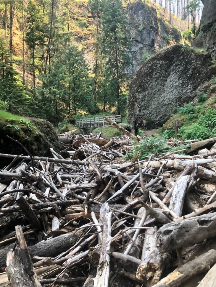 wahclella falls log jam