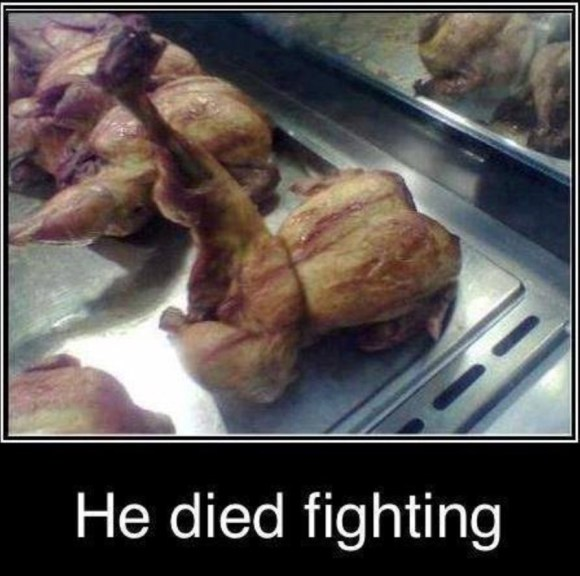 Chicken Fighting copy