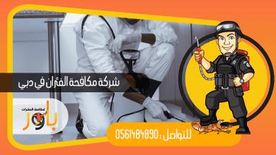 صورة شركة مكافحة الفئران في دبي