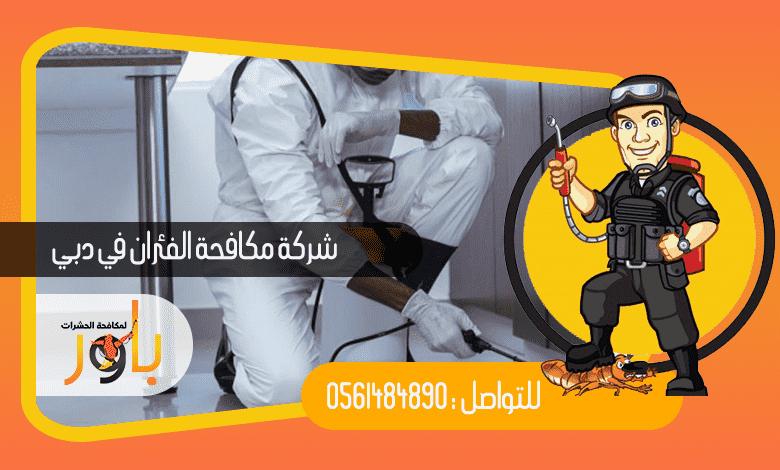 شركة مكافحة الفئران في دبي